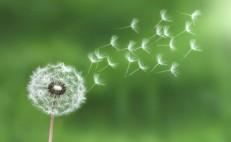 dandelion-bess-780x481